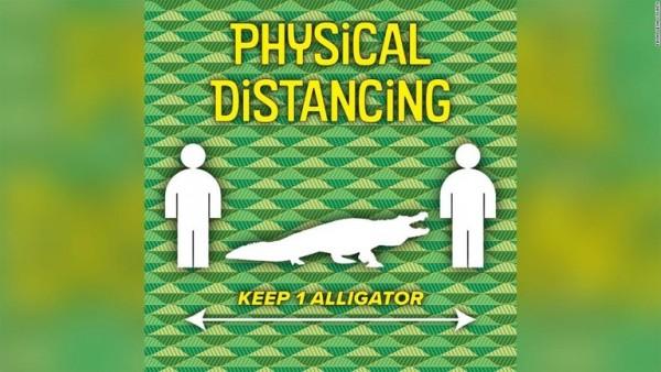 image social-distancing-florida-alligator-trnd-super-169.jpeg